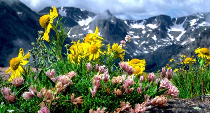 Лечение на псориазис с цветята на д-р бах
