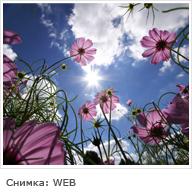 Депресии!!!! Sunny-nature